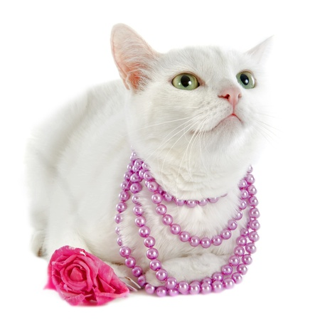 pink pearl: white cat with pearl collar in front of white background Stock Photo