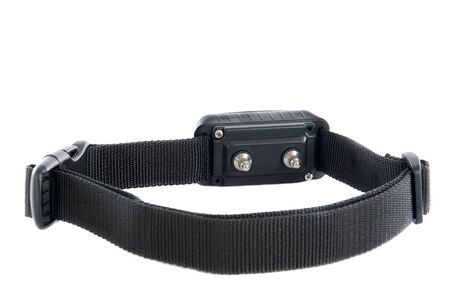 electronic collar dog for obedience in front of white background photo