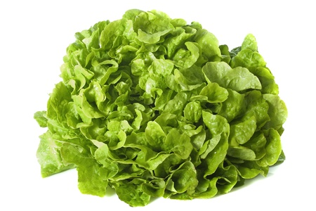 lactuca: green Lactuca quercina in front of white background Stock Photo
