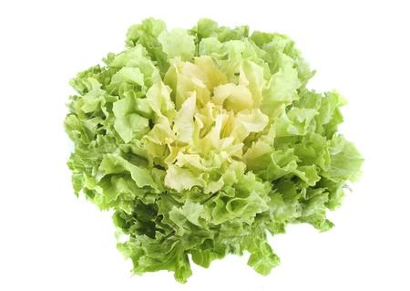 salad Escarole endive in front of white background