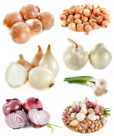spring onions: group of onions in front of white background Stock Photo