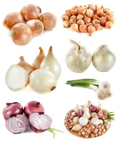 cebolla blanca: grupo de cebollas delante de fondo blanco Foto de archivo