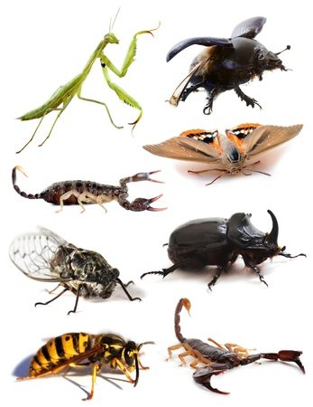coleoptera: insects and scorpions in front of white background