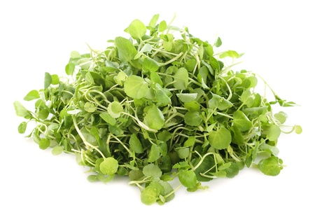 Watercress, Nasturtium officinale, in front of white background