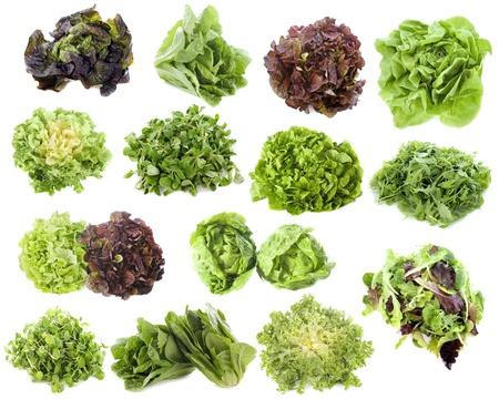 andijvie: variëteiten van salades in de voorkant van een witte achtergrond