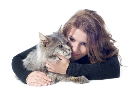 portrait of a purebred  maine coon cat and woman on a white background Stock Photo - 16883319