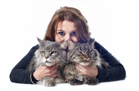 gray cat: portrait of a purebred  maine coon cats and woman on a white background