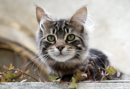 tabby cat with green eyes  in the nature Stock Photo - 17333388