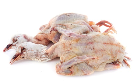 two pigeons meat in front of white background Stock Photo - 17841214