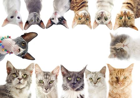 group of purebred cats on a white background photo