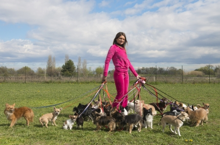 portrait of a woman and a large group of chihuahuas  photo