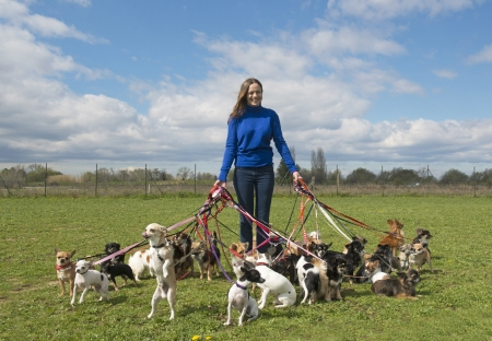 dog leash: portrait of a woman and a large group of chihuahuas