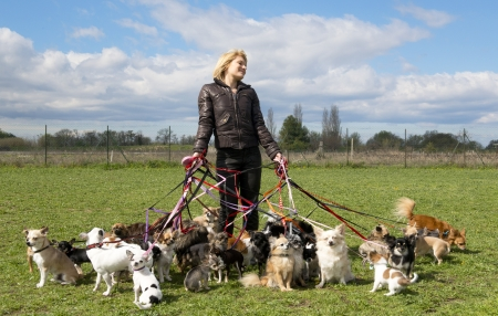dog sitting: portrait of a woman and a large group of chihuahuas