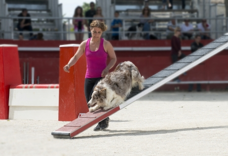 agility dog: jumping purebred  border collie  in a competition of agility Stock Photo