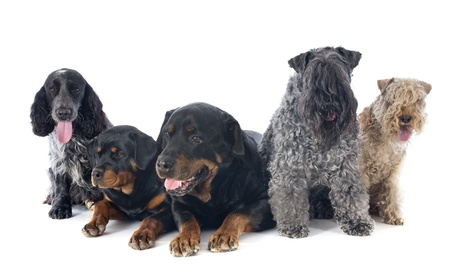 five dogs in front of white background photo