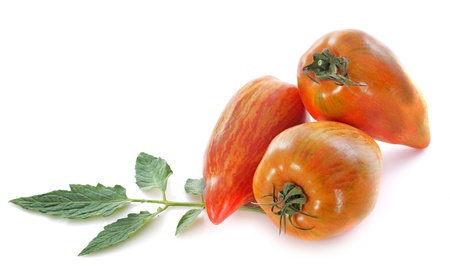 San Marzano tomatoes in front of white background photo