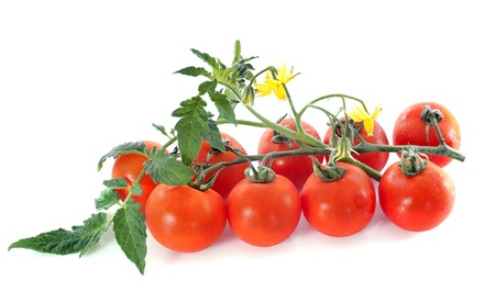 Grape or cherry tomato branch with leaves on white Stock Photo - 20752192