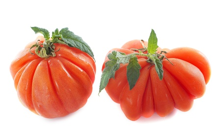 Beefsteak tomatoes in front of white background Stock Photo - 20752197