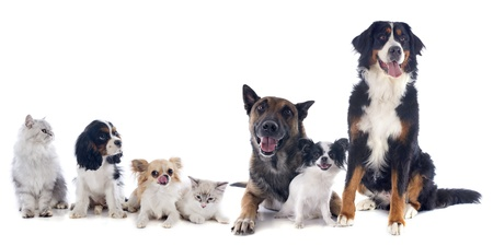 white dog: seven dogs and cat in front of white background