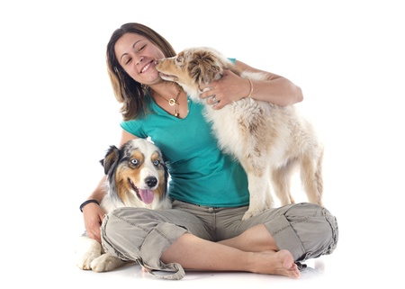 purebred australian shepherds and woman  in front of white background photo