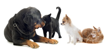 dogs and cats in front of white background photo