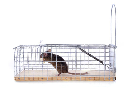 mouse trap in front of white background Stock Photo