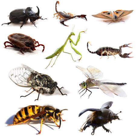 cigarra: insectos y escorpiones en frente de fondo blanco
