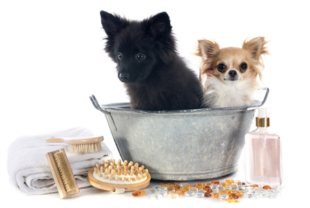 bathtub: two dogs in a bathtub in front of white background