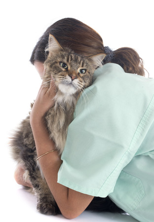 portrait of a purebred  maine coon cat and vet on a white background