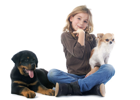 impish: young girl, rottweiler and chihuahua in front of white background Stock Photo