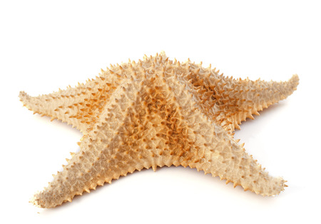 thorny starfish in front of white background Stock Photo - 23422193