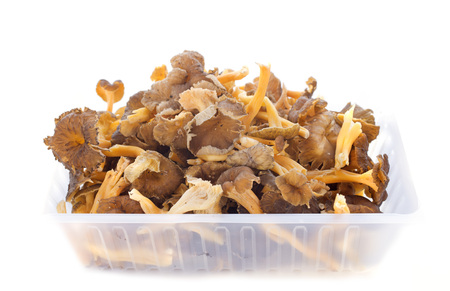 chanterelle: golden chanterelles in front of white background