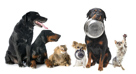dog food: hungry pets in front of a white background