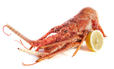red crayfish in front of white background