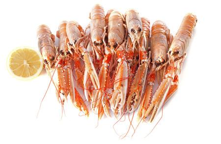 crayfish: Dublin Bay Prawn in front of white background