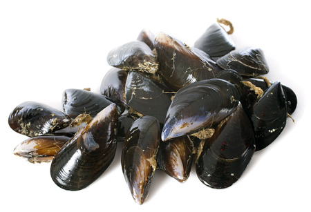 raw mussels in front of white background