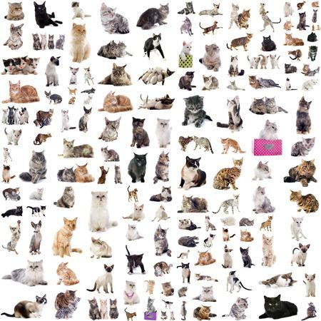 groep van katten en kitten op een witte achtergrond Stockfoto