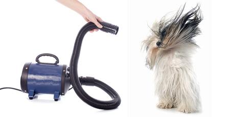 Sèche-cheveux pour chien devant un fond blanc Banque d'images - 27041648