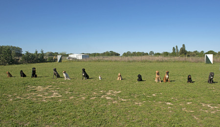 grupo de perros en un entrenamiento de la obediencia Foto de archivo