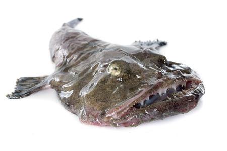 foto van zeeduivel in de voorkant van de witte achtergrond