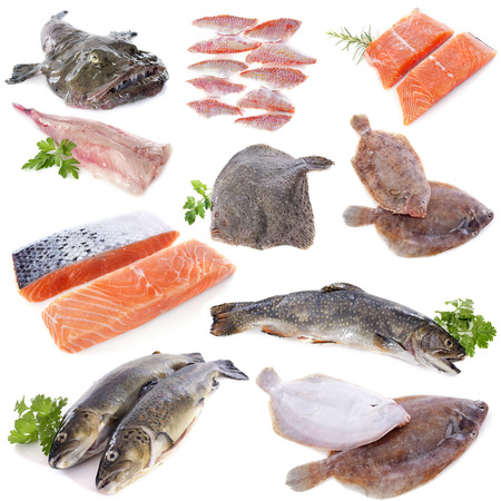 group of fishes in front of white background photo