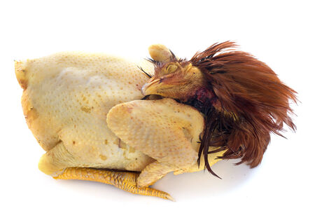 pullet: raw capon in front of white background