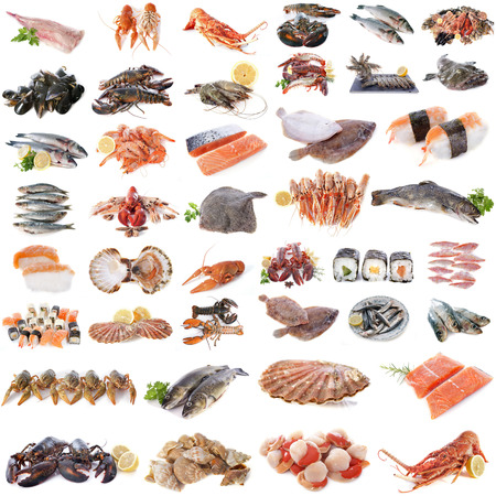 seafood, fish and shellfish in front of white background photo