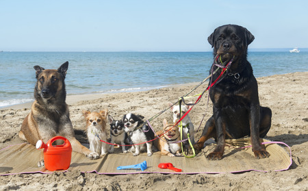 playing in the sea: group of purebred dogs on the beach