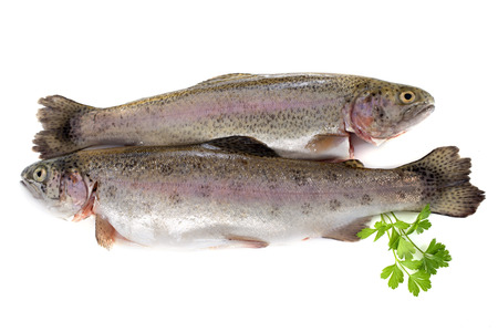 trout: rainbow trout in front of white background Stock Photo