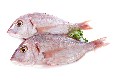 Red Snapper in front of white background Stock Photo