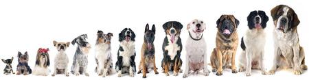 groep van honden voor witte achtergrond Stockfoto