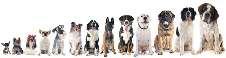 little: group of dogs  in front of white background