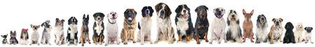 groep honden voor witte achtergrond