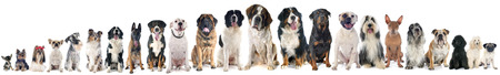 group of dogs of white background Archivio Fotografico